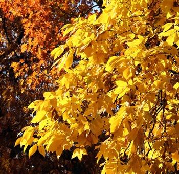 Wohin mit dem Herbstlaub?