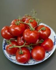 5 Gründe, warum das Ausgeizen von Tomaten-Pflanzen so wichtig ist
