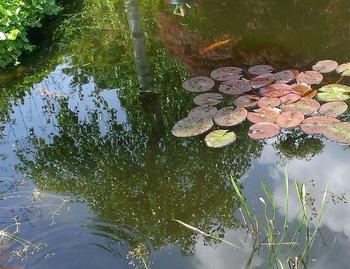 Teich – was ist im Frühjahr zu tun?