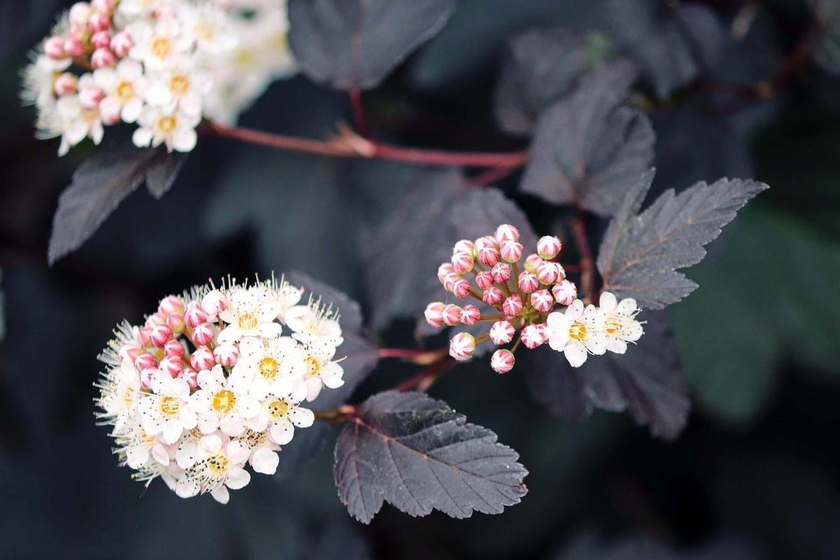 Schnell wachsende Pflanzen für einen Sichtschutz   freudengarten