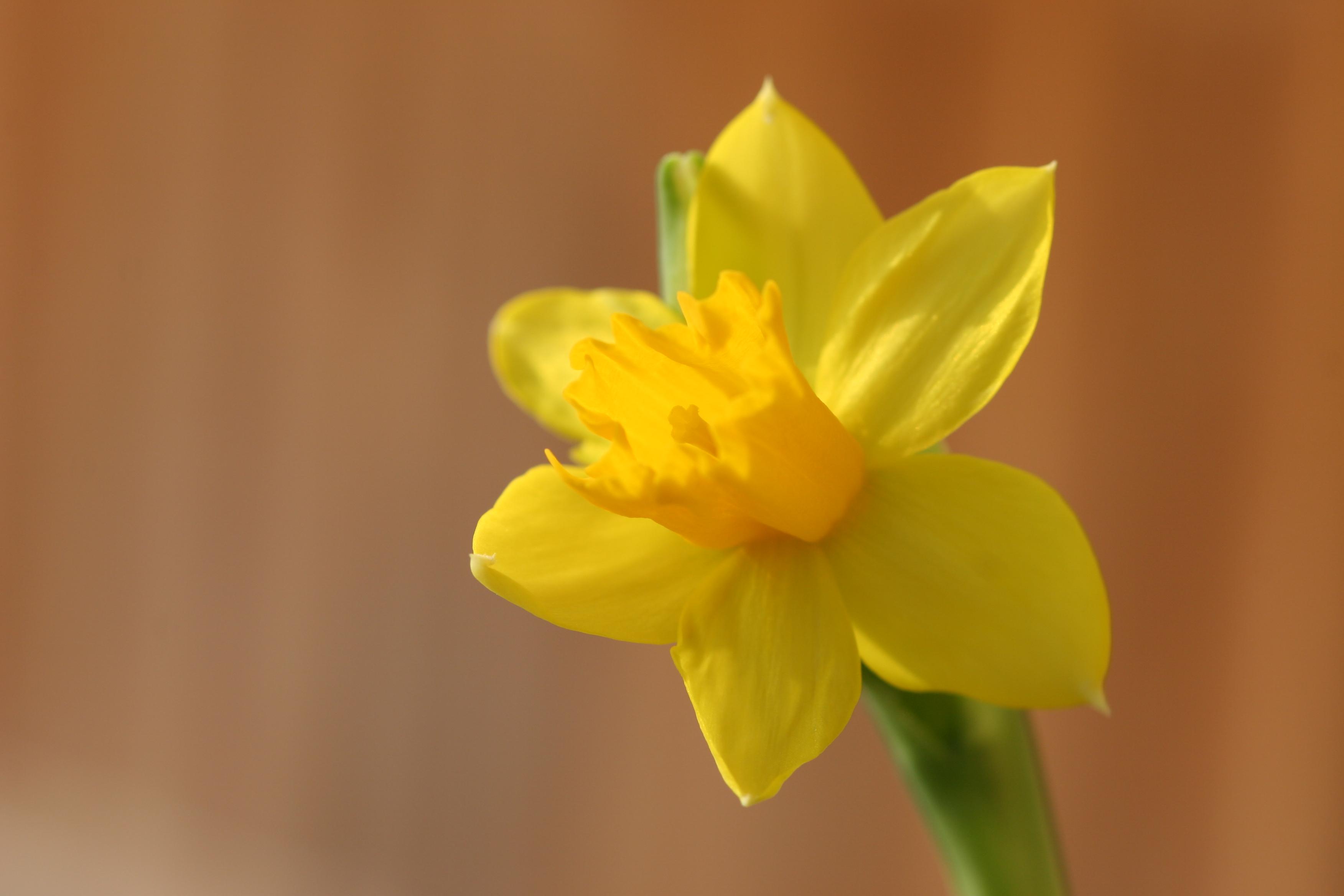 Es blüht so gelb - der Frühling kommt!