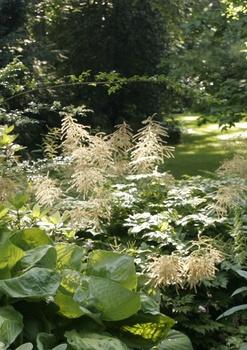 Astilben für schattige Gartenbereiche