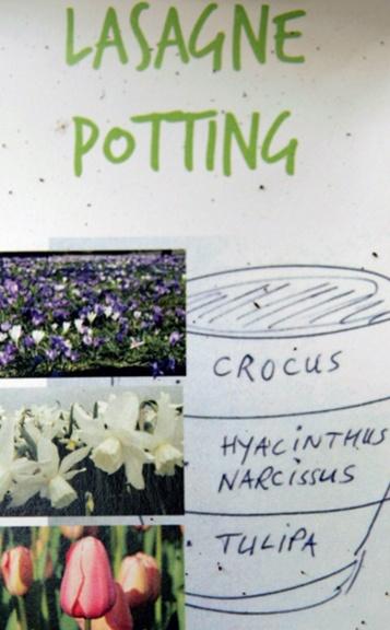 freudengarten - jetzt vorbereiten: frühlingsblumen drei monate, Garten und Bauten