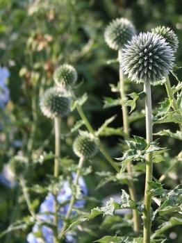 Pflanzen, die du nicht zu gießen brauchst