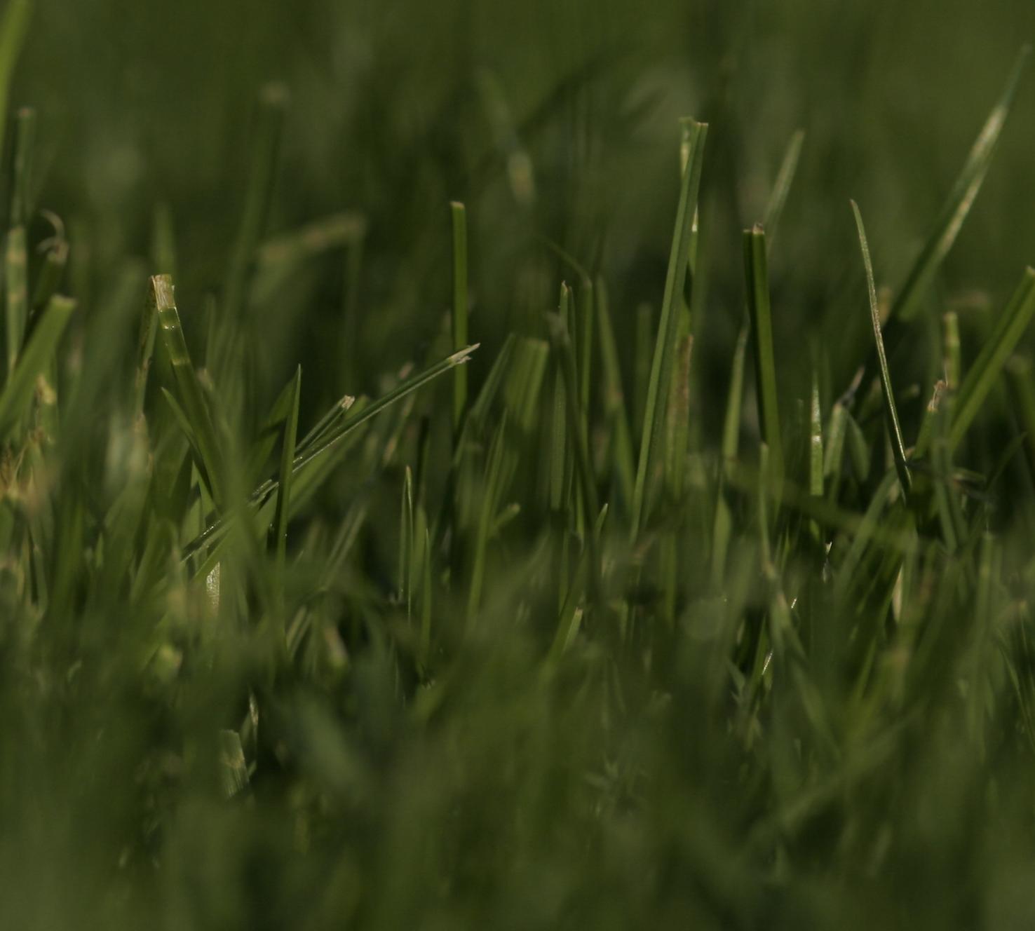 Rasen säen