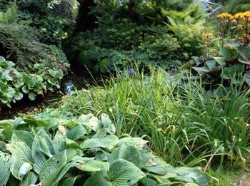 Üppige Beete sorgen für Dschungel-Atmosphäre im Garten