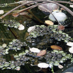 Teichpflege im September