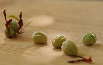 Falsche Kapern aus Samen der Kapuzinerkresse selber machen