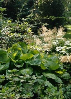 Pflegeleichten Garten mit üppigen Beeten anlegen