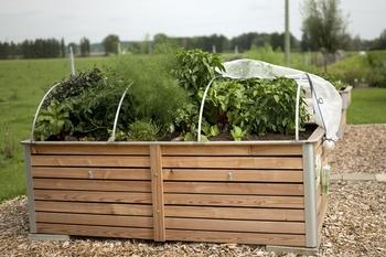 Hochbeet - die richtige Größe, Lage, Material und Gemüsepflanzen