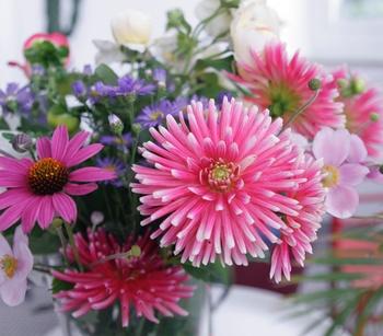 Schnittblumen in den Garten pflanzen
