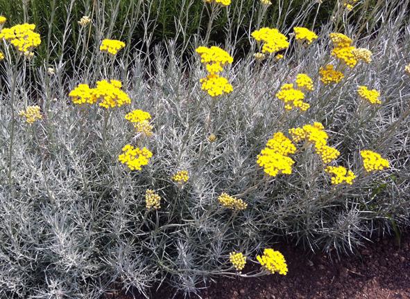Beliebt Bevorzugt Schneckenresistente Blumen und Pflanzen &EK_71