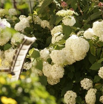 Gartenarbeit im August - das ist jetzt im Garten zu tun