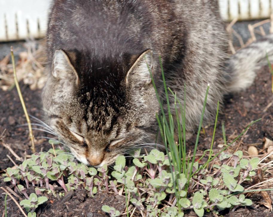 Endlich Katzenminze!