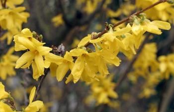 Gartenmonat April - diese Gartenarbeiten stehen an
