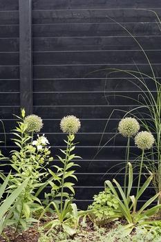 Sichtschutz im Garten - Ideen zu Materialien und Pflanzen