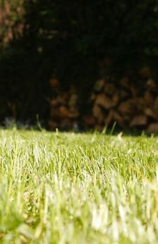 Rasen richtig pflegen, mähen, düngen, gießen