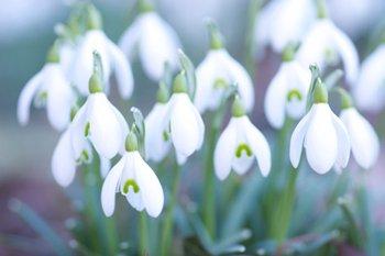 Gartentipp für den Februar
