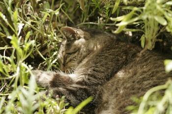 Katzenbett im Kräuterbeet