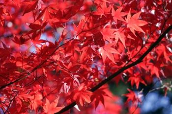 Sträucher mit bunten Blättern im Herbst