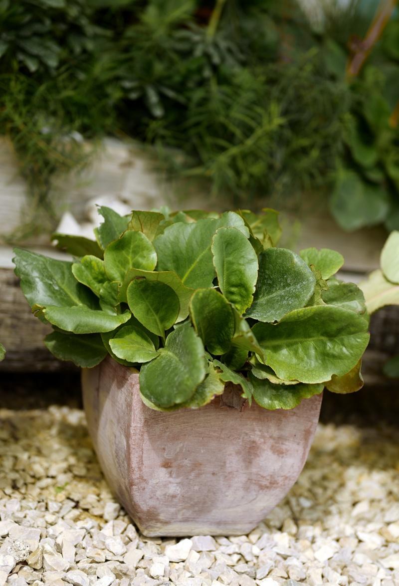 Freudengarten winterharte k belpflanzen for Winterharte kubelpflanzen