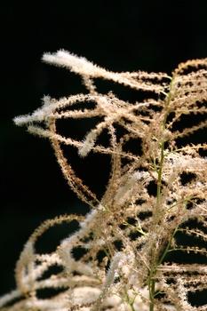 Sieben Schattenstauden, die wunderschön blühen