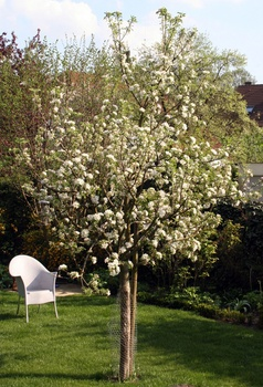 Den richtigen Baum für einen kleinen Garten finden