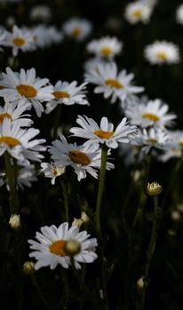 18 essbare Blüten für einen gelungenen Augen- und Gaumenschmaus