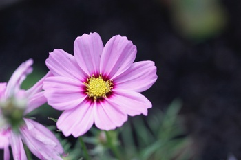 Wie Du mit einjährigen Pflanzen Deinen Garten zum Blühen bringst