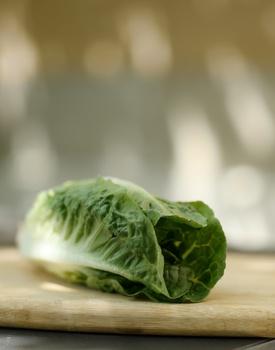 Salat säen, pflanzen, anbauen, ernten,