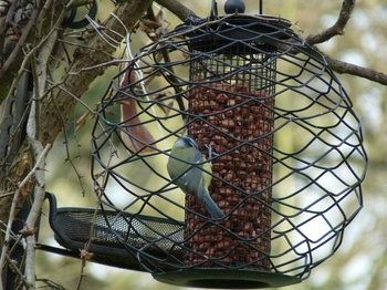 Vögel auf dem Balkon füttern