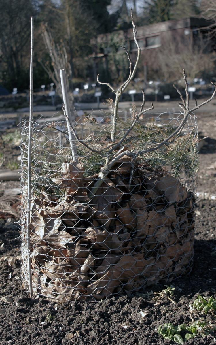 Winterschutz von Pflanzen im Garten: Die besten Materialien und Tipps