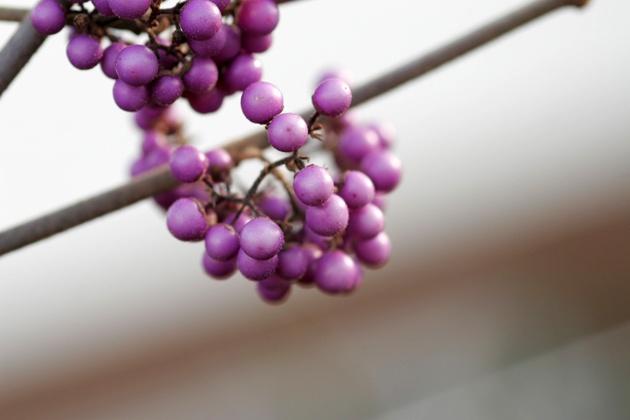 Freudengarten - Blüten Und Farben ? Auch Im Winterlichen Garten Pflanzen Garten Im Winter
