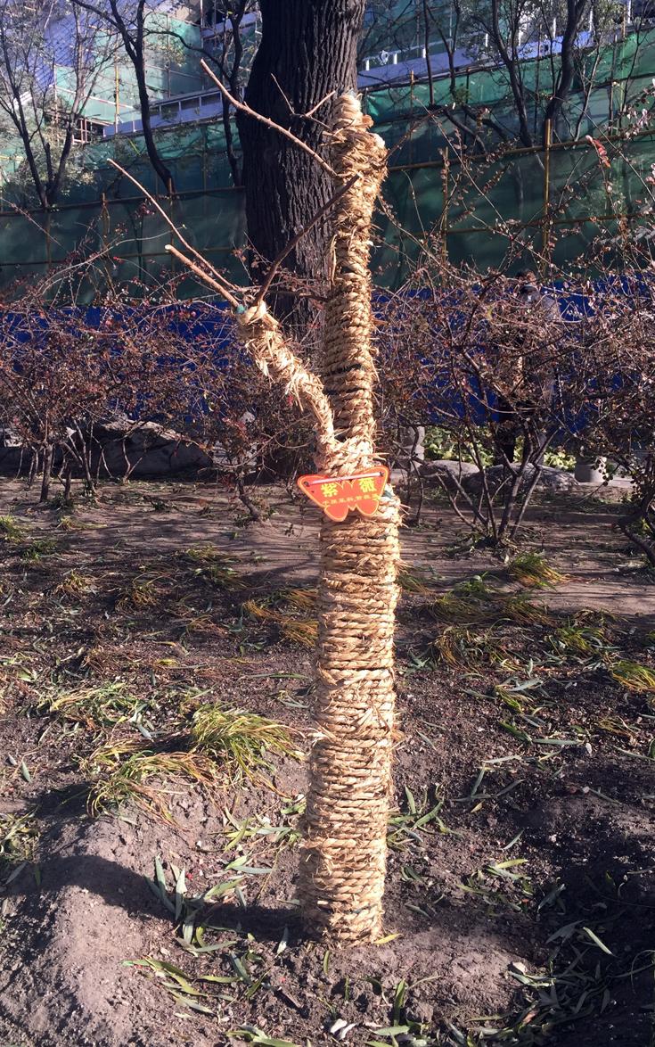 Winterschutz für Bäume
