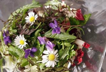 Salat mit den ersten Kräutern aus dem Garten
