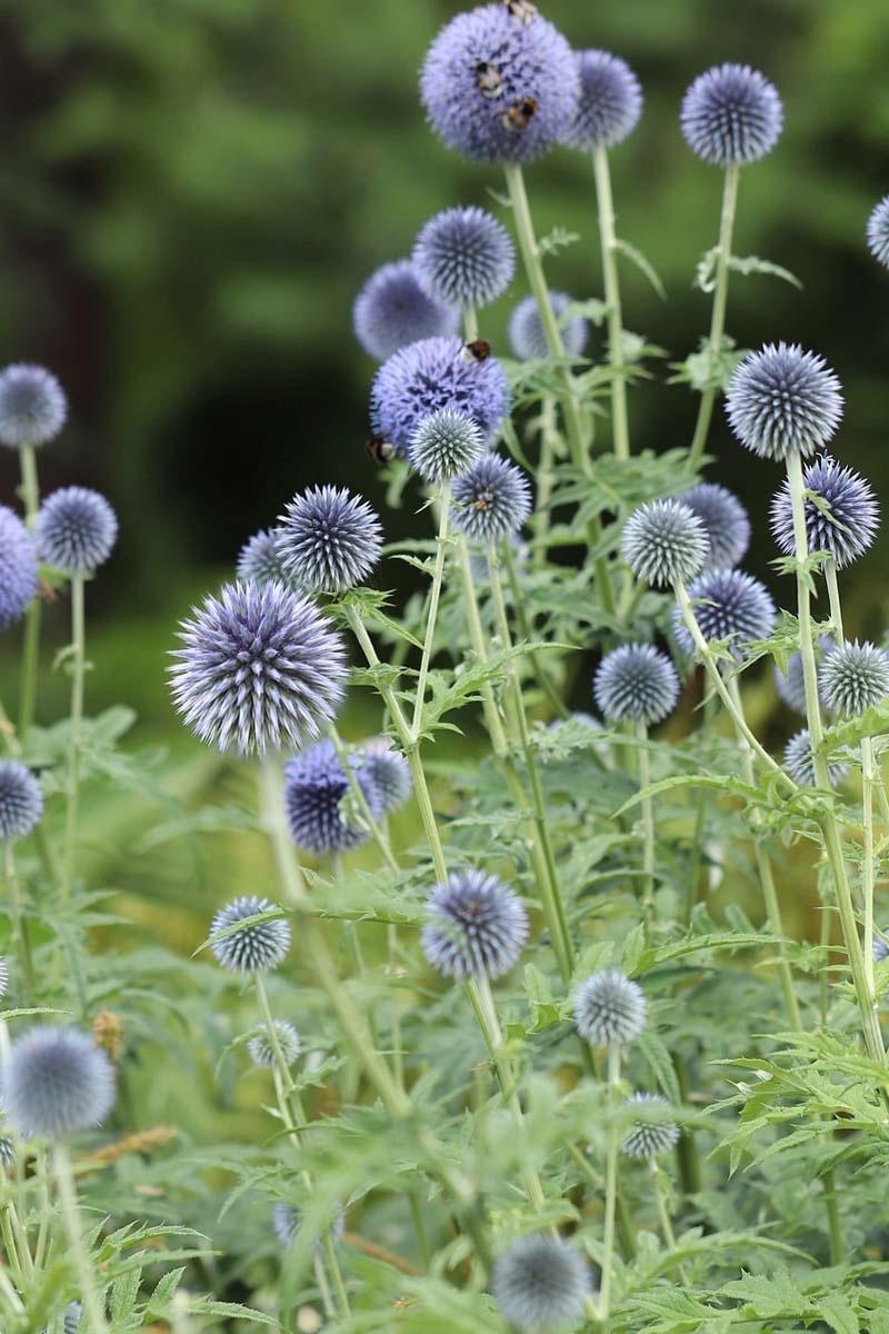 8 pflegeleichte Gartenpflanzen, die keine Mühe machen   freudengarten