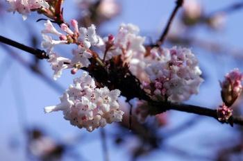 Blüten und Farben – auch im winterlichen Garten
