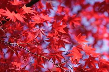 Warum färben sich die Blätter im Herbst bunt?