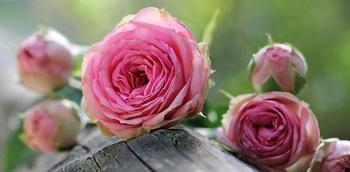 Mein Valentinsgeschenk an alle Gartenfreunde