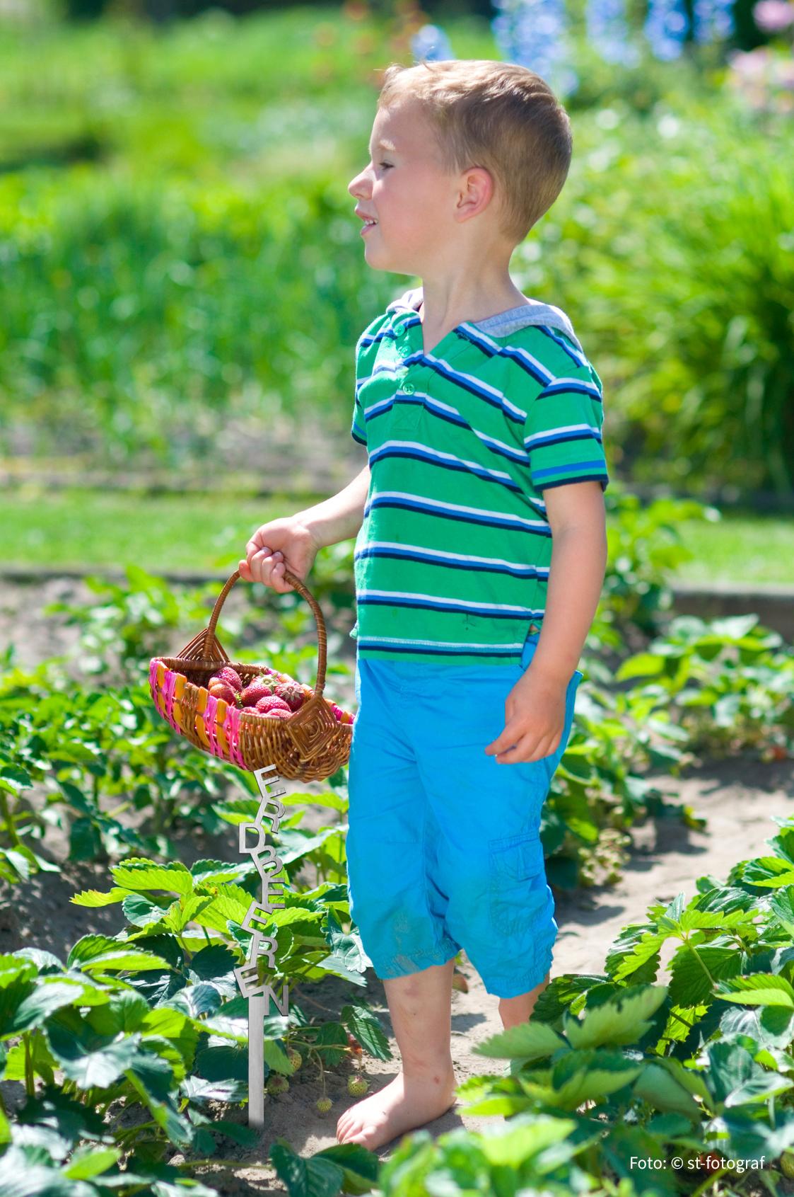Edelstahl Pflanzen- und Gartenschild