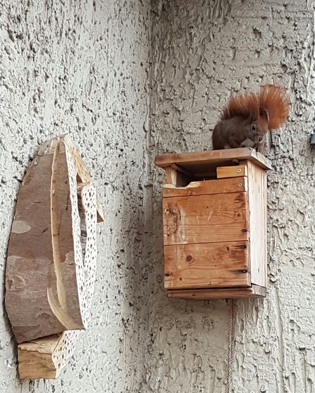 Eichhörnchen zu Gast auf einem Bio-Balkon