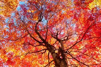 Wie Sie Herbstlaub sinnvoll weiter verwenden