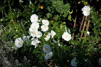 Gartenarbeiten im August und Spätsommer