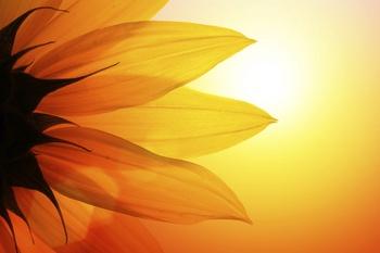 Mit diesen 4 Tipps überlebt Ihr Garten die Urlaubszeit
