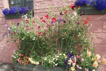 Flowerpower im hohen Norden