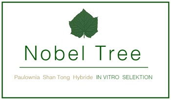 Paulownia Shan Tong Hybride IN VITRO SELEKTION