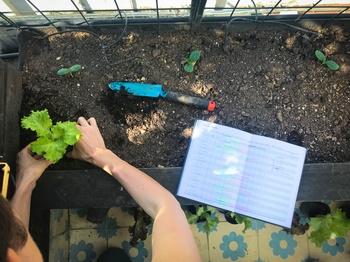 Der Gartenplaner für alle StadtgärtnerInnen, die ihr eigenes Gemüse anbauen