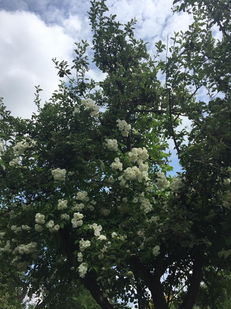 Freudengarten 6 beliebte immergr ne pflanzen f r den garten - Pflanzen fur japanischen garten ...