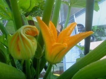 Gemüse am Balkon anbauen: ein Rückblick zwecks Vorfreude