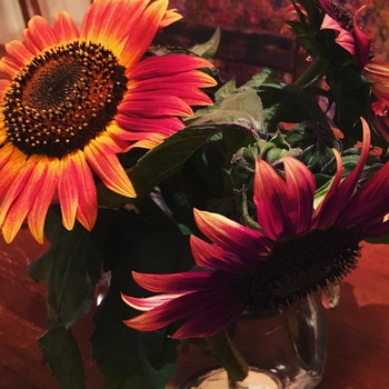 Sonnenblumen vom Feld..